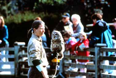 Woodland Park Zoo Instructor with Owl at Woodland Park Zoo